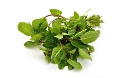 hierba-buena-Mentha-spicata